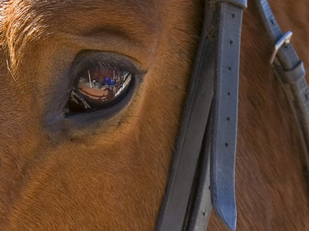 Discover the Healing Power of Equine Therapy